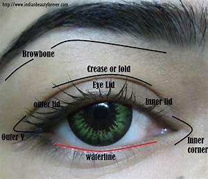 Eye Makeup Terms And Parts Of Eyes With Diagram