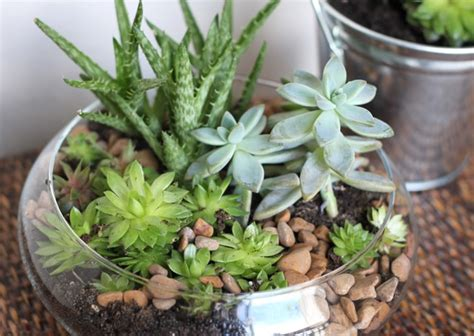 best succulents for indoors 10 diy indoor herb garden ideas and planters honey lime