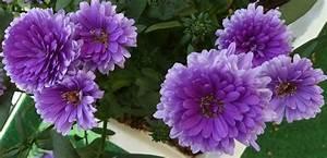 Blumen Im Juli : juli blumen und bl ten fotoclub 58 leipzig ~ Lizthompson.info Haus und Dekorationen