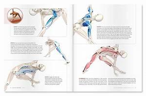 Synergist Definition Anatomy