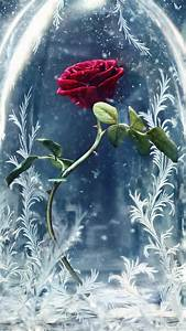 Wallpaper, Beauty, And, The, Beast, Glass, Rose, Best, Movies, Movies, 12848