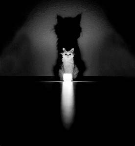 Black & White Photos Reveal The Mysterious Lives Of Cats