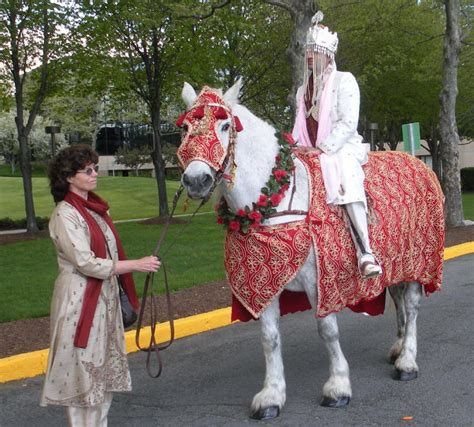 baraat horse decorated white horse  horse  drawn