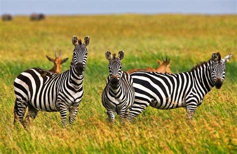 tansania und sansibar buchen sie hier  tage  tansania