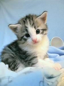 Cute Cat image ... Cute Cats