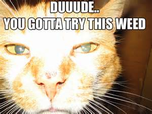 the chronicle collection of lolcats getting stoned
