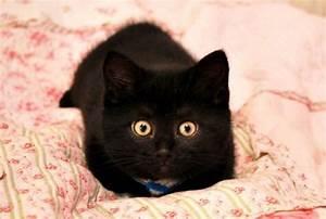 Kiwi the Little Fuzzy Black Baby - Love Meow