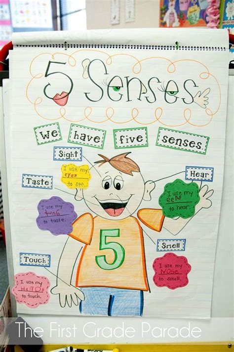 weve    anchor charts senses activities