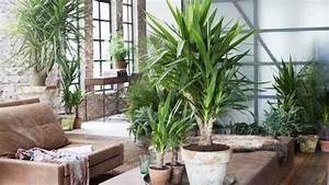 Gut Riechende Zimmerpflanzen : zimmerpflanzen die mit wenig licht gut auskommen ~ Markanthonyermac.com Haus und Dekorationen