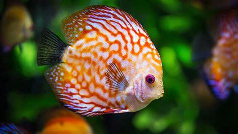 les 10 meilleurs poissons pour d 233 buter avec un petit aquarium les10meilleurs fr