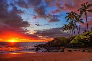 Tropical sunset - Sunsets & Nature Background Wallpapers ...