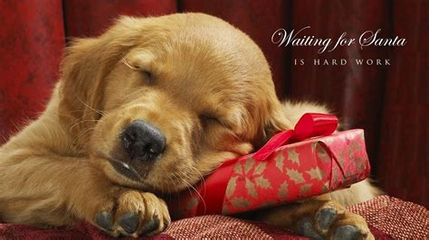 9.94 mb, was updated 2017/19/07 requirements hi, there you can download apk file christmas dog live wallpaper for android free, apk file version is 1.0 to download to your android device just. Puppy Christmas Wallpapers - Wallpaper Cave