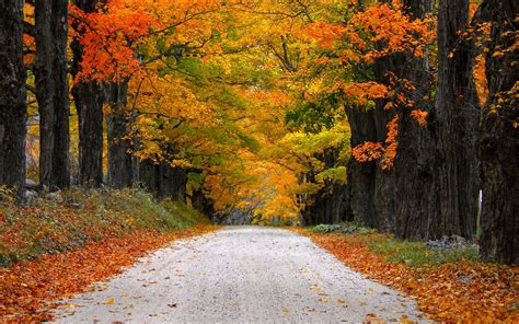 autumn nature path leaves mountain fall colorful