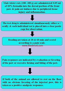 Screening Methods For Analgesic Activity On Animal Model