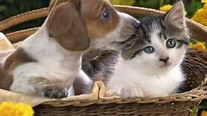 Cat And Dog Wallpaper  U00b7 U2460 Wallpapertag