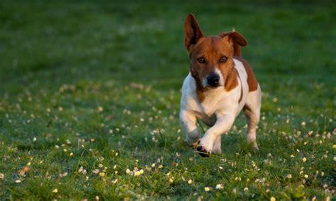 un petit chien dans la rue alpes maritimes verbalis 233 e pour un pipi de chien
