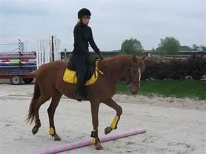 couleurs d39equipement selon la robe du cheval With quelle couleur va avec le gris 1 quelle couleur dequipement pour un cheval gris