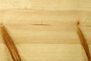 Kubikmeter Berechnen Holz : kiefern f hren und kieferb ume ~ Yasmunasinghe.com Haus und Dekorationen