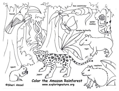 Rainforest Animals Coloring Pages by Rainforest Color Pictures Rainforest Coloring