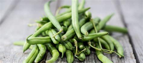 cuisiner les haricots verts frais cuisiner des haricots verts frais 28 images comment