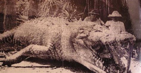 foto de crocodilo monstro de   morto em  gera