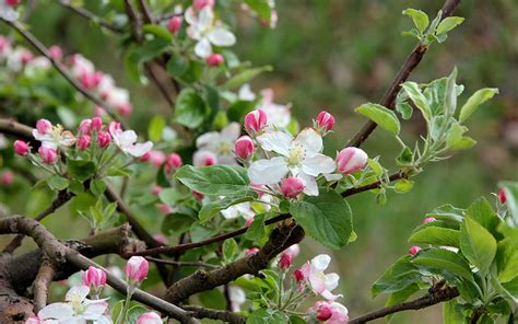 Cooperativa Sociale Il Gabbiano - cooperativa sociale quot il gabbiano quot le mele