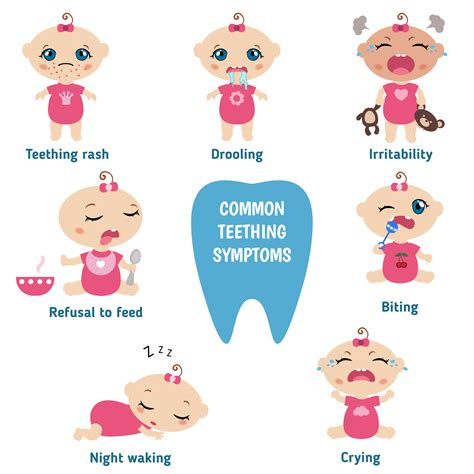 When Do Babies Start Teething Baby Now Brand