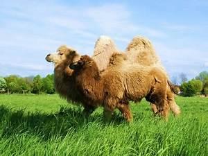 Starke Gerüche Entfernen : infos zur pflege ihrer kamelhaar bettdecke produktblog von purnatour ~ Markanthonyermac.com Haus und Dekorationen