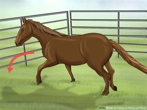 horse tame pony wikihow