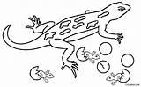 Lizard Coloring Gecko Printable Colouring Reptiles Template Drawing Cartoon Reptile Cool2bkids Desert Getdrawings Dozer Vector Getcoloringpages Picolour Getcolorings Crawling Ceiling sketch template