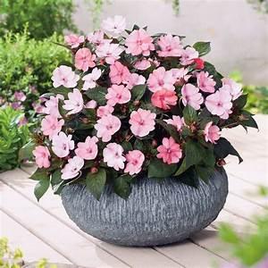 Pflanzen Für Schattige Plätze : 26 besten gartenpflanzen f r beet und k bel bilder auf pinterest ~ Orissabook.com Haus und Dekorationen