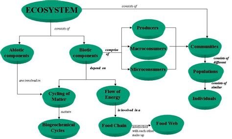 Ecosystem Definition Biology Ecosystem Ecosystem 1 Definition Of Ecosystem 2
