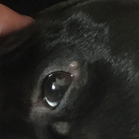 mein hund hat   auge  ist das tierarzt entzuendung
