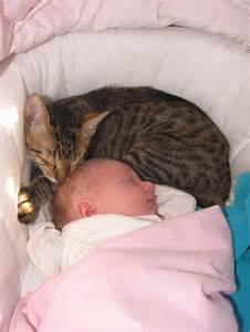 cats and newborns cat taking a nap with the baby cats photo 35964202