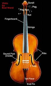 Viola Diagram - Viola Photo  887229