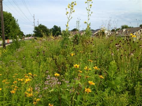The Grackle Native Prairie Plants In Midwestern Gardens