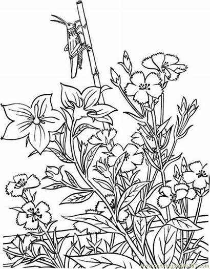 Coloring Garden Pages Printable Opper Natural Flower