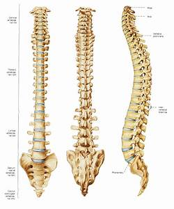 Degenerative Disc Disease – Don't be fooled (part 2 ...