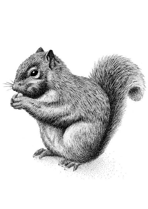 coloring page squirrel  printable coloring pages img