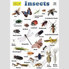 Insects English Large Chart  Kindergarten Art Lessons  Pinterest  Insects, English And