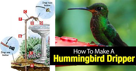 how to make a hummingbird dripper