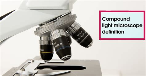 light microscope definition compound light microscope definition