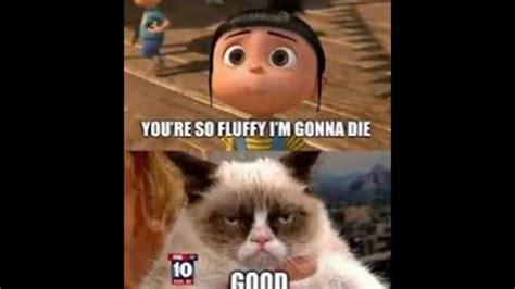 Grumpy Cat Memes Part 1