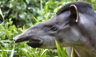 Amazon Rainforest Endangered Animals List