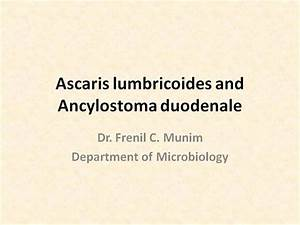 Ascaris Lumbricoides And Ancylostoma Duodenale