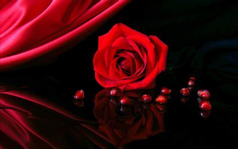 Hd 3d Rose Wallpaper Download