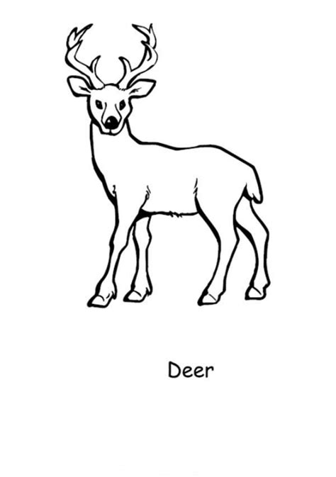Coloring Pictures For by Deer Coloring Pages And Print For Free