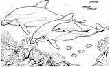 Dolphin Coloring Pages Dolphins Animals Swimming Printable Realistic Sheets Adults Dophin sketch template