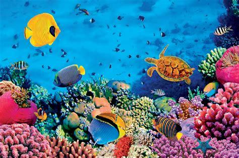 Kā Sarkanā jūra ieguva savu nosaukumu? - Ilustrētā Junioriem