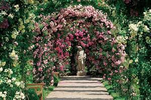 Comment Tailler Les Rosiers : rosiers remontants ou rosiers grimpants roses guillot ~ Nature-et-papiers.com Idées de Décoration